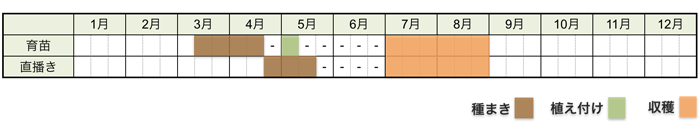 ズッキーニの栽培時期・栽培スケジュール