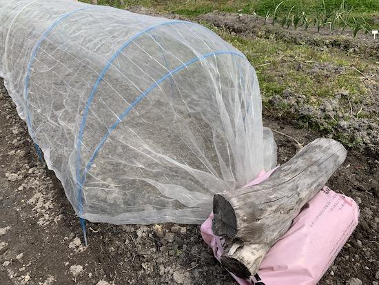 トンネル資材の余った分は袋に入れて押さえる