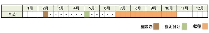 シシトウ・トウガラシの栽培時期・栽培スケジュール
