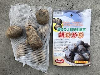 里芋の種芋(絹ひかり)