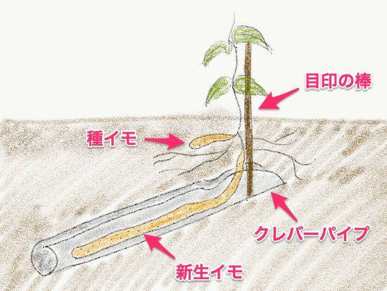 クレバーパイプで山芋・長芋・自然薯栽培