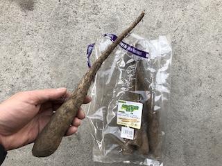 ヤマイモの種イモ