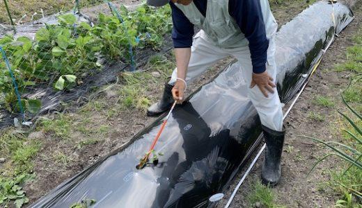 さつまいも苗の植え付け作業に「かんしょ植え付け器  さすけ」