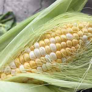 トウモロコシの栽培方法