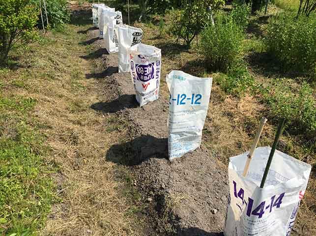 防虫対策に肥料の空き袋で苗を覆う(あんどん)