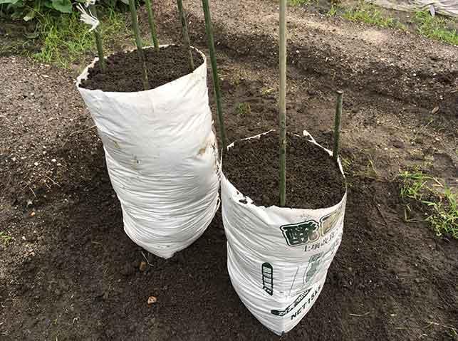 ゴボウ袋栽培の準備