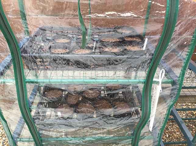 ビニール温室で育苗
