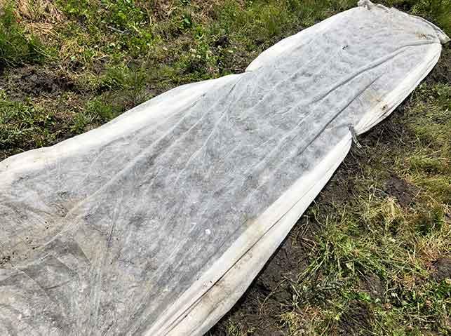 エダマメの種の鳥害対策に不織布を掛ける