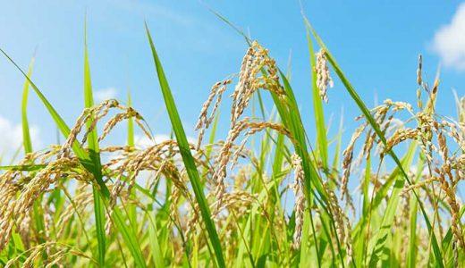 農業に関するまとめ記事