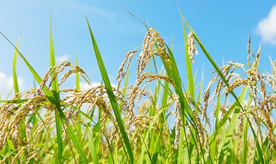 農業まとめ記事