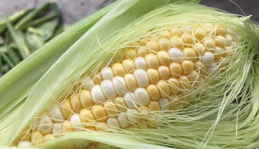 トウモロコシの栽培方法・育て方のコツ