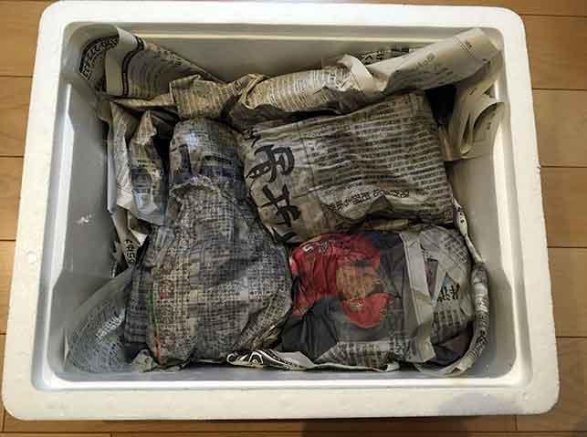 新生姜を新聞紙に包み水に濡らして保存
