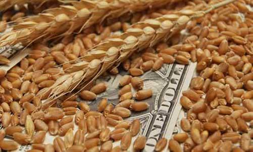 どの野菜が儲かるの?品目別の農業所得と労働時間まとめ