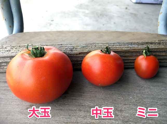 大玉・中玉・ミニトマトのサイズ比較