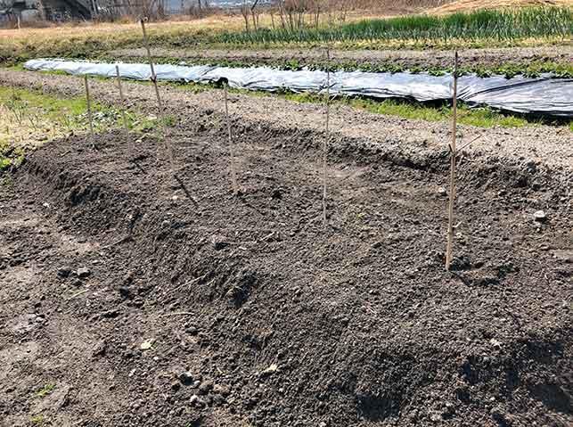 パイプの上に土を盛って畝を立てる