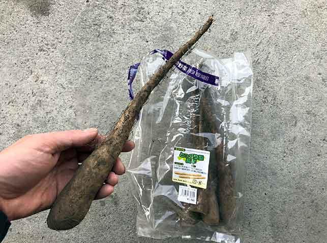 ヤマイモの種イモ(とっくり型)