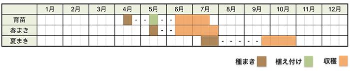 インゲン(いんげん豆)の栽培時期・栽培スケジュール