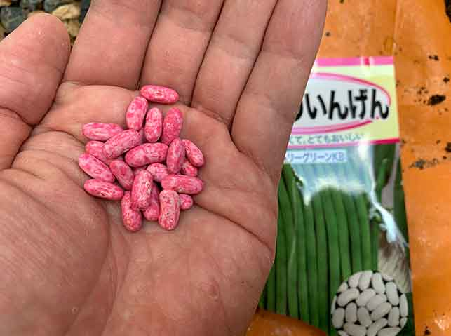 インゲン(いんげん豆)の種