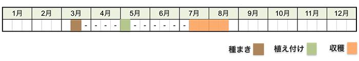 スイカの栽培時期・栽培スケジュール