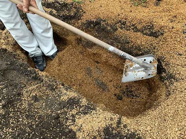 里芋を貯蔵する穴を掘る