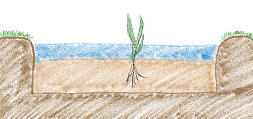 水田の土層・構造