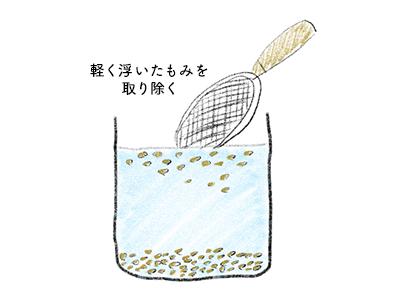 塩水選で良質の種籾を選別