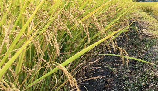 お米作りの一年の流れと作業内容