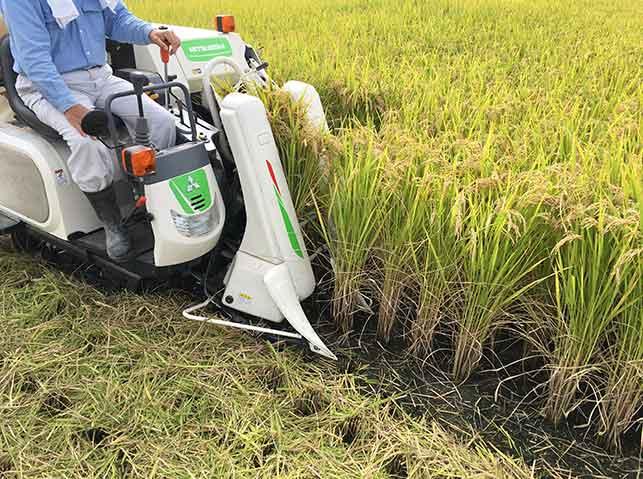 コンバインで稲の収穫作業