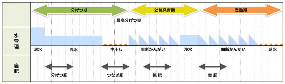 水稲栽培の水管理と追肥タイミング