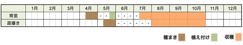 シソの栽培時期・栽培スケジュール