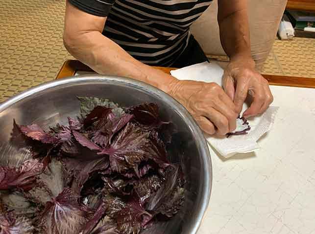 洗った赤紫蘇の葉の水を拭き取りる