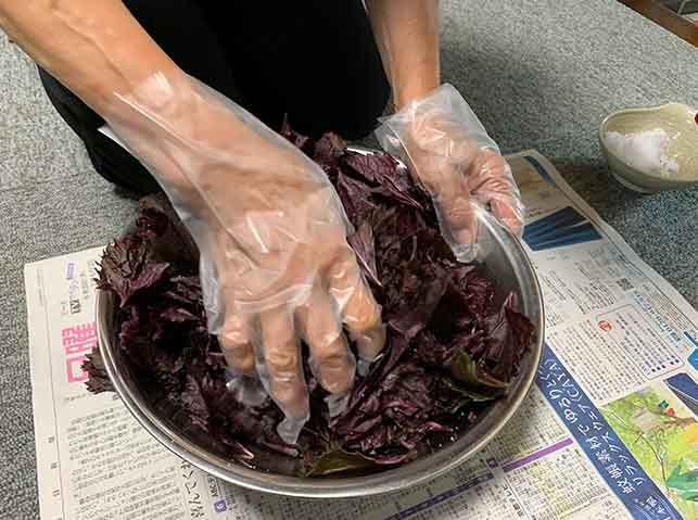 赤紫蘇に塩を揉み込む