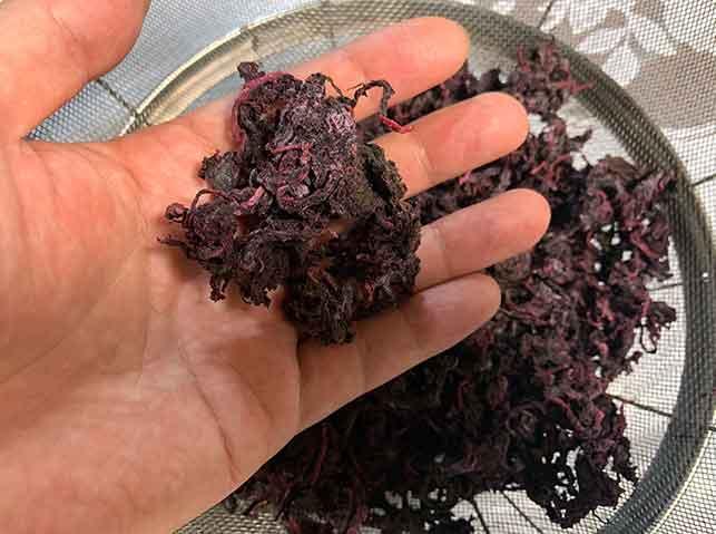 カラカラに乾燥した赤紫蘇