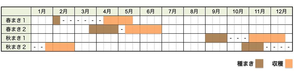 カブ(蕪)の栽培時期・栽培スケジュール