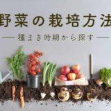 野菜の栽培方法【種まき時期から探す】