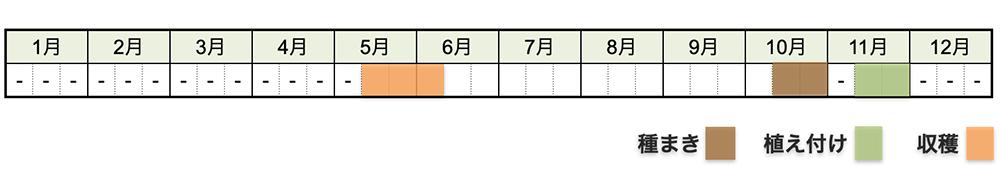 ソラマメ(そら豆)の栽培時期・栽培スケジュール