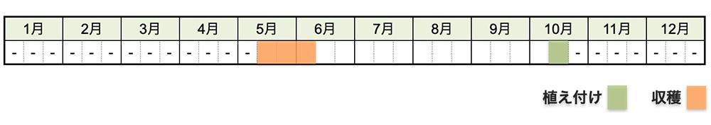 イチゴの栽培時期・栽培スケジュール