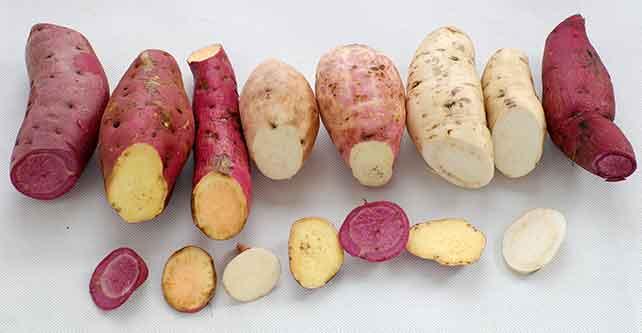 サツマイモの色々な品種