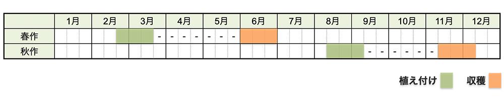 ジャガイモの栽培時期・栽培スケジュール
