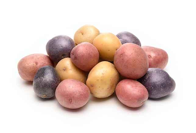 いろいろな品種のジャガイモ