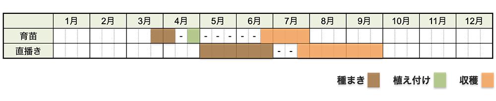 トウモロコシの栽培時期・栽培スケジュール