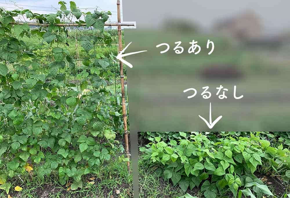 インゲン 方 なし つる の 育て つるなしインゲンをプランターで育てる方法(栽培法)