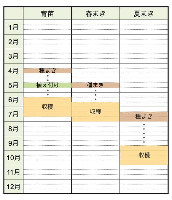 方 いんげん豆 育て 平莢いんげん(モロッコインゲン)育て方☆種まき(4月・5月・6月)