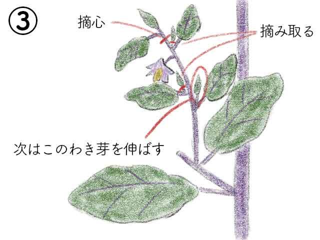 次の側枝を同様に伸ばす