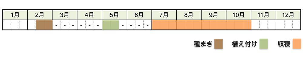 ナス(茄子)の栽培時期・栽培スケジュール