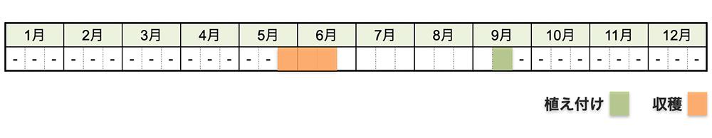 ニンニクの栽培時期・栽培スケジュール