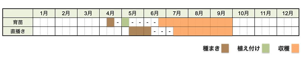 オクラの栽培時期・栽培スケジュール