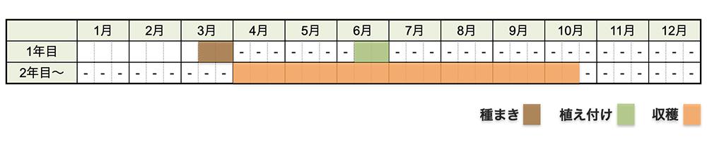 ニラの栽培時期・栽培スケジュール