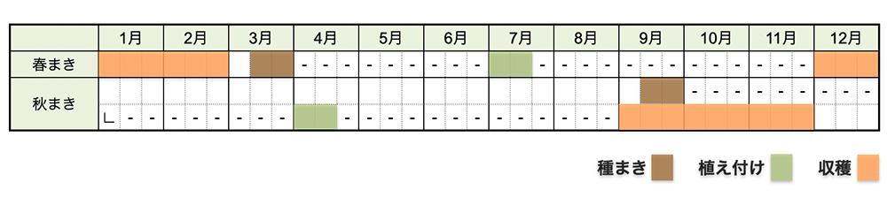 ネギ(白ネギ・長ネギ・根深ネギ)の栽培時期・栽培スケジュール