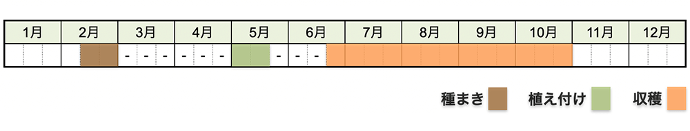 ピーマン・パプリカの栽培時期・栽培スケジュール